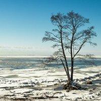На Финском заливе :: Виталий