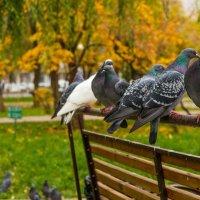 голубки :: Наталья Рублева