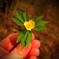 Цветок :: Анна Кравченко