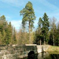 Через мостик в весеннюю сказку. :: VasiLina *