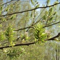 Весна пришла... :: Maryana Petrova