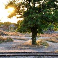 Вид с поезда :: Римма Закирова