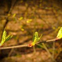 Пробуждение весны... :: Анна Кравченко