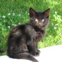 Только чёрному коту и не везёт... :: Надежда
