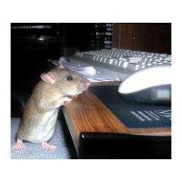 Две мышки :) :: Ирина Via