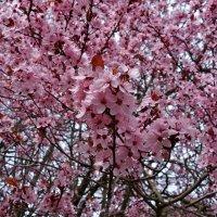 """""""...Этот праздник цветов, пчёл глухое жужжанье, Словно добрая сказка ..."""" :: Galina Dzubina"""