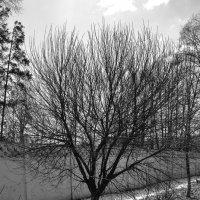 Дерево :: Luba Koba