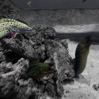 пятница 13.. под водой :: Mari_L