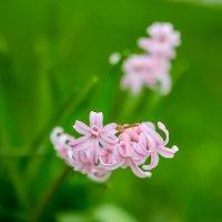 Цветы :: Николай Николенко