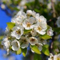 Весна. :: Ирина ...............