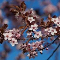 Время весны :: Анна Васильева (Anna-82V)