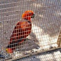 Попугай :: Лариса