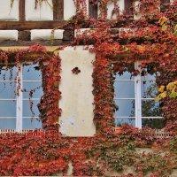 Осень в Кольмаре :: Natali Positive