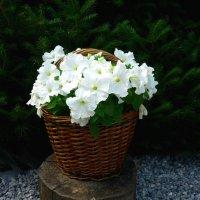 Корзинка с цветами :: Алла ZALLA