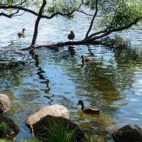 На озере :: Надежда