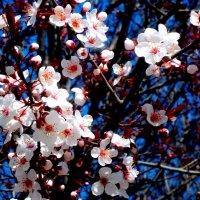 Весна! :: Нина Бутко