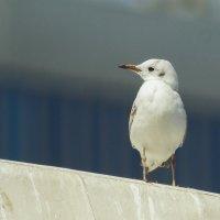 Птица в белом :: Павел Руденко