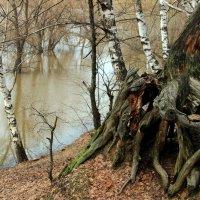 Держа корнями берега... :: Лесо-Вед (Баранов)