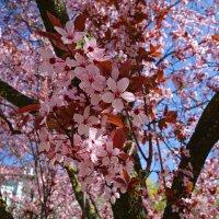"""""""О цветы на ветвях, Удержите его ароматом!..."""" :: Galina Dzubina"""