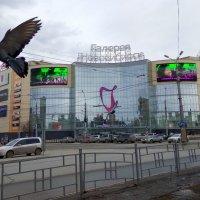 Галерея Новосибирск :: Марина Таврова