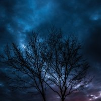 Деревья на закате :: Sergiy Korkulenko
