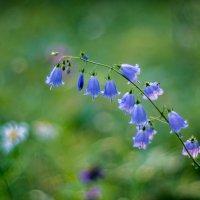 лесные цветы :: Vlad Us