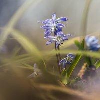 весна 2 :: Геннадий Свистов