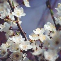 цветы :: Стас