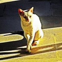 Кот :: Лариса