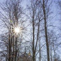 Солнечный денёк :: Нина Кутина
