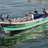 голодные пеликаны, ждут рыбных отходов :: Георгий
