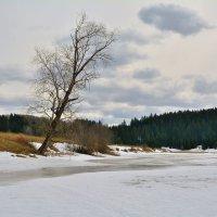 Холодный апрель. :: Александр Зуев