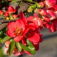 весенние цветы IMG_2335 :: Олег Петрушин
