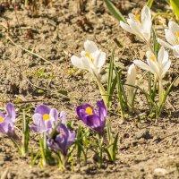 Первые цветы :: bajguz igor