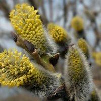 Это весна! :: * vivat.b *