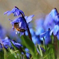 Весна..гости на цветах.. :: Татьянка *