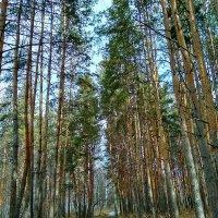 Хорошо в лесу в апреле ... :: Татьяна Котельникова