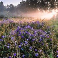 солнце в лесу :: Василий И Иваненко