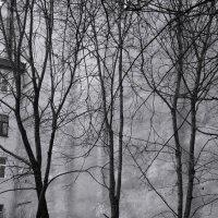 трезвучие от ноты ре :: sv.kaschuk