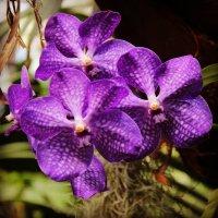Орхидея :: Lеsя Sеmейкинa