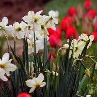 Весенний букет :: barsuk lesnoi