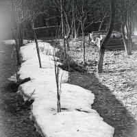 Зима уползает :: Григорий Кучушев