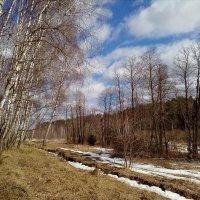 Весна в лесу :: Валентина (Panitina) Фролова