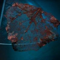 Сухой листок на стекле :: Михаил Онипенко