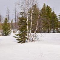Весенняя зима :: Виталий Россия