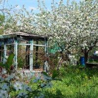 Цветущий сад :: Лариса