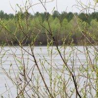 Река Десна, апрель :: Александр Скамо