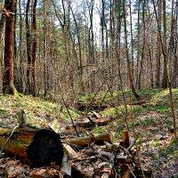 В лесу. :: Михаил Столяров