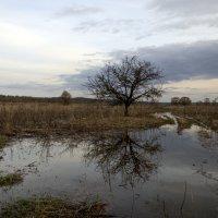 дерево в воде :: Константин Сафронов