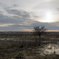 вечер в поле :: Константин Сафронов
